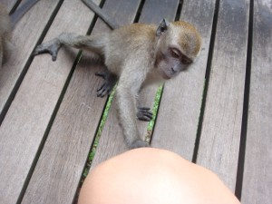 a friendly monkey trying to pick ticks off me, but of course I have none