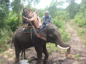 riding elephant in thailand as it stopped to urinate