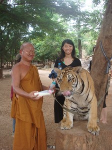 monk feeding adult tiger milk from baby bottle as we posed behind them for pictures