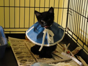 sick kitten wearing a special collar