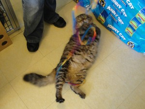 cat playing with colorful string