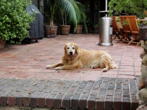 a dog laying on brick area