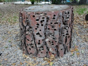 a sitting log full of holes