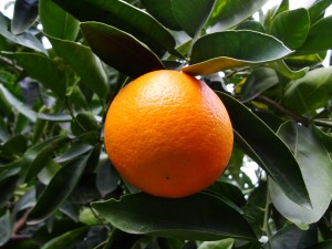 closeup of orange