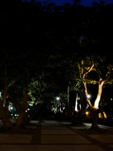 trees lined up neatly, with lights