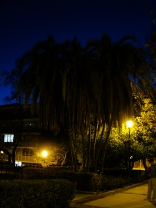 palm trees in the dark