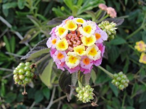 cluster of bright-colored flowers