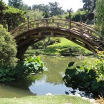 bridge with high arch in japanese garden