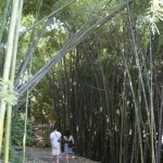 couple wandering into pathway lined with bamboo