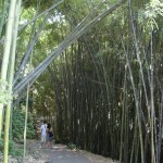 couple deep in bamboo forest