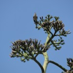 a bird perches high above us on the cactus tree