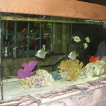 fish in tank at end of mediterranean bar
