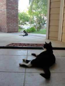cats lounging in summer heat, one inside doorway and one outside - both laying in same position
