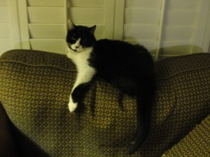molly the cat lounging on sofa cushion with arm dangling