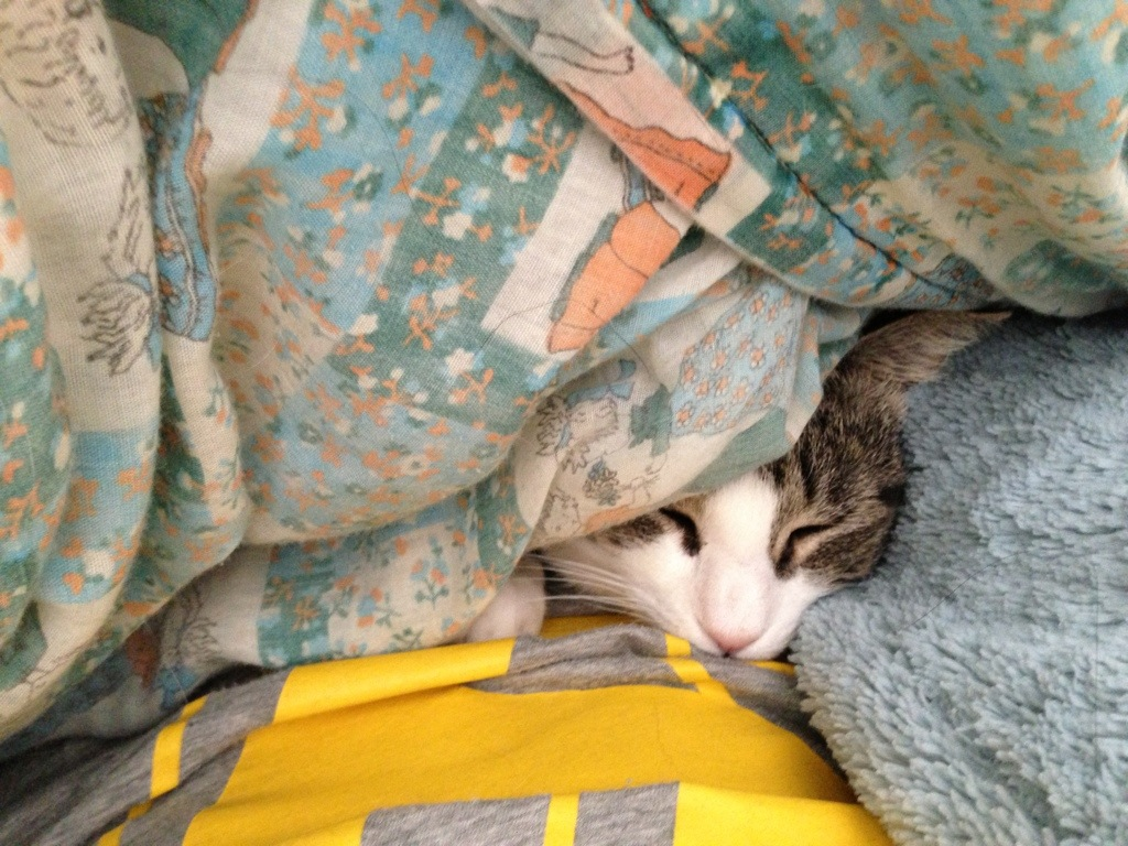 cat face peeking out from under blanket