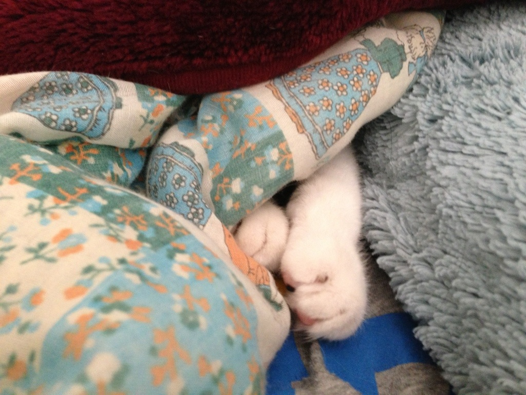 cat paws peeking out from under blanket