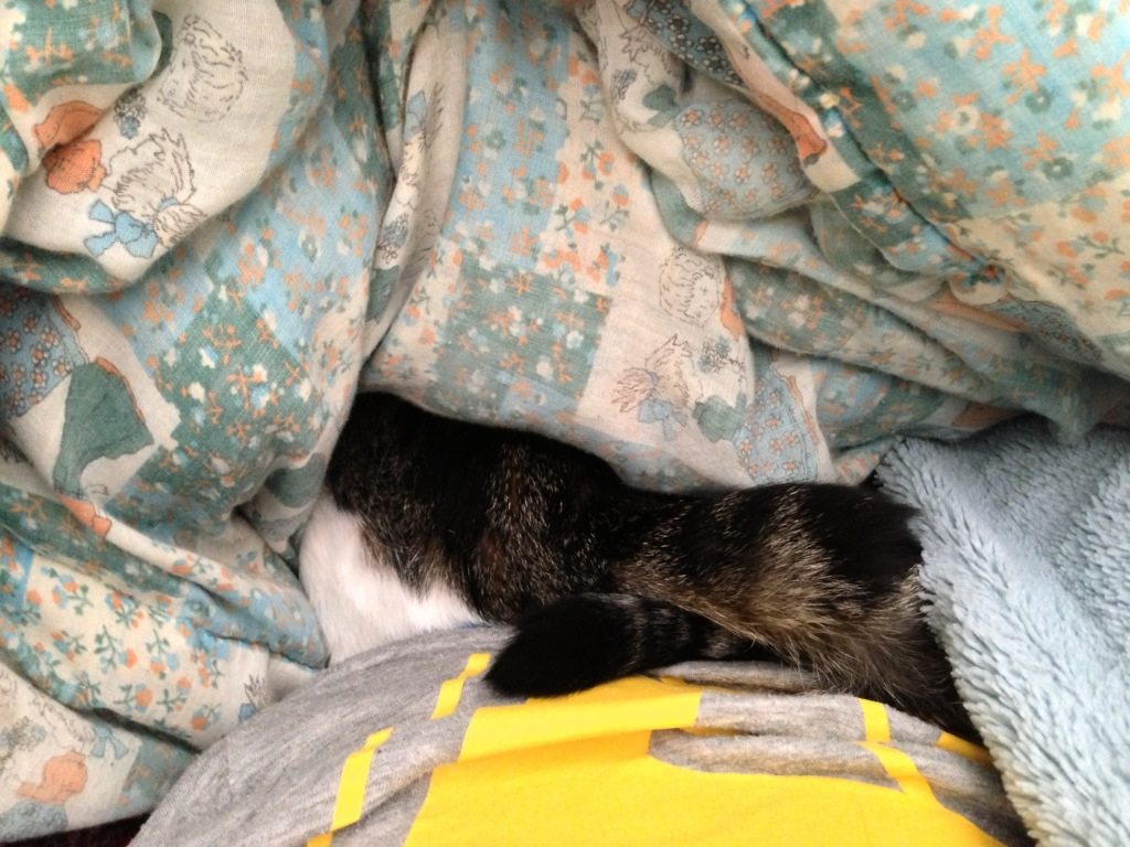 cat tail and fur peeking out from under blanket