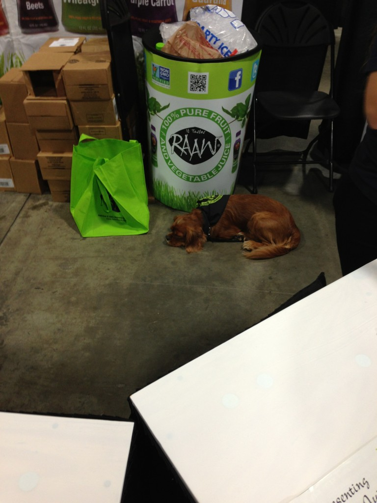 brown dog napping on floor at conference booth