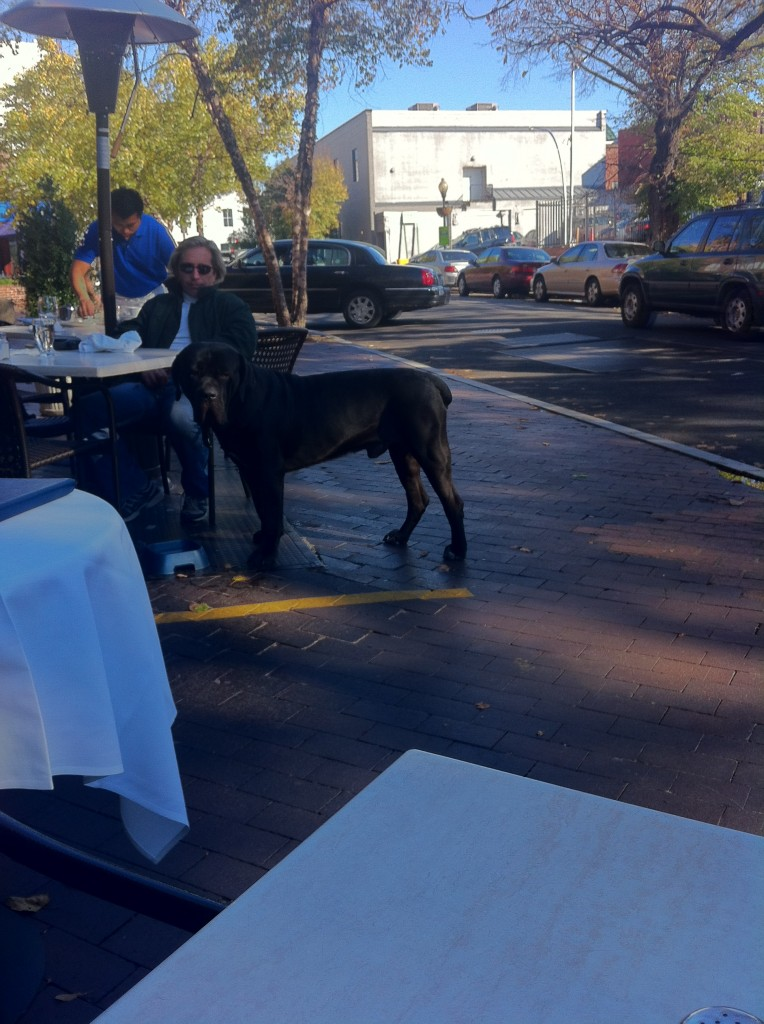 giant black dog standing by outdoor table at restaurant