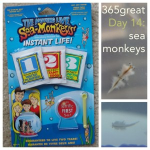 365great challenge day 14: sea monkeys
