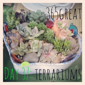 365great challenge day 37: terrariums