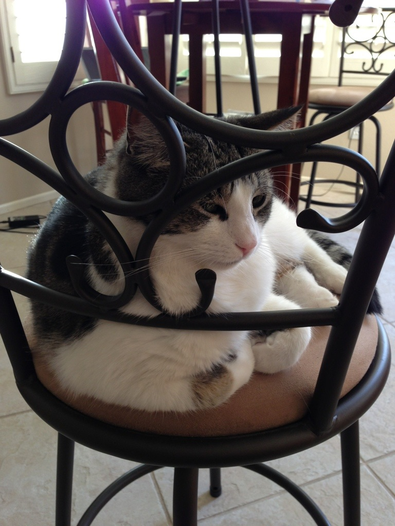 cat sitting on chair leaning against metal railing