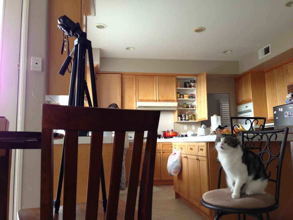 cat sitting on chair looking up at camera on tripod