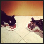 two cats facing each other both eating wet food from plates
