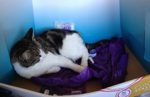 cat laying in box on top of tissue paper and beauty products