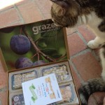 cat sniffing graze box
