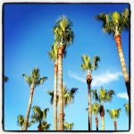 palm trees against gorgeous blue sky with white cloud