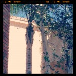 small image of hummingbird next to trees outside window screen