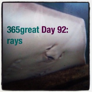 365great challenge day 92: rays