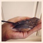 holding small brown bird in palm of hand