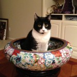 black and white cat sitting in giant oversized bowl decorated with flower pattern