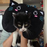 cat with neck pillow on back