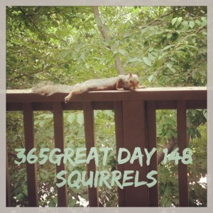 365great challenge day 148: squirrels