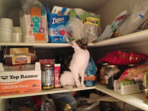 cat sitting on shelf in pantry among various food products