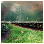 collage of turtle in pond and rabbit on grass