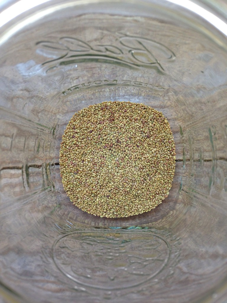 pile of alfalfa seeds in layer at bottom of glass ball jar
