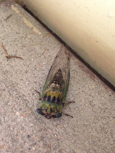 closeup of cicada sitting on stairs