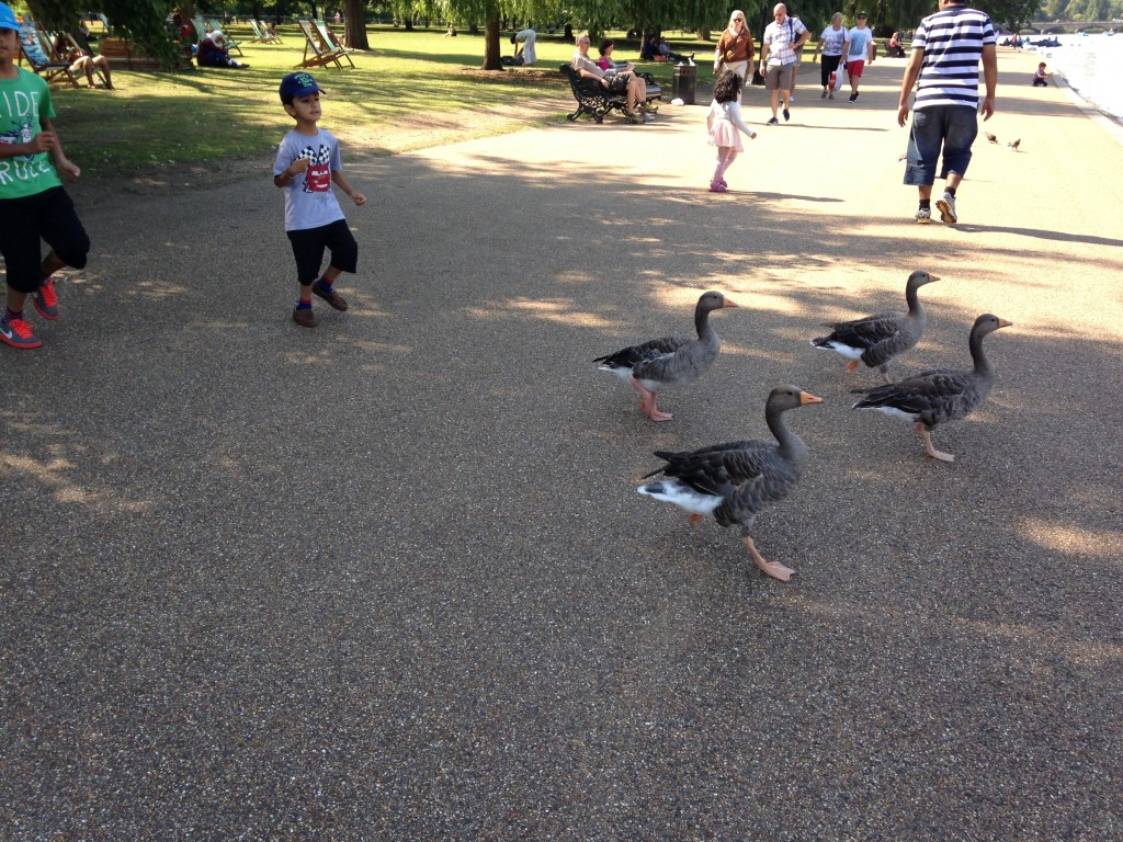 kids chasing geese in park