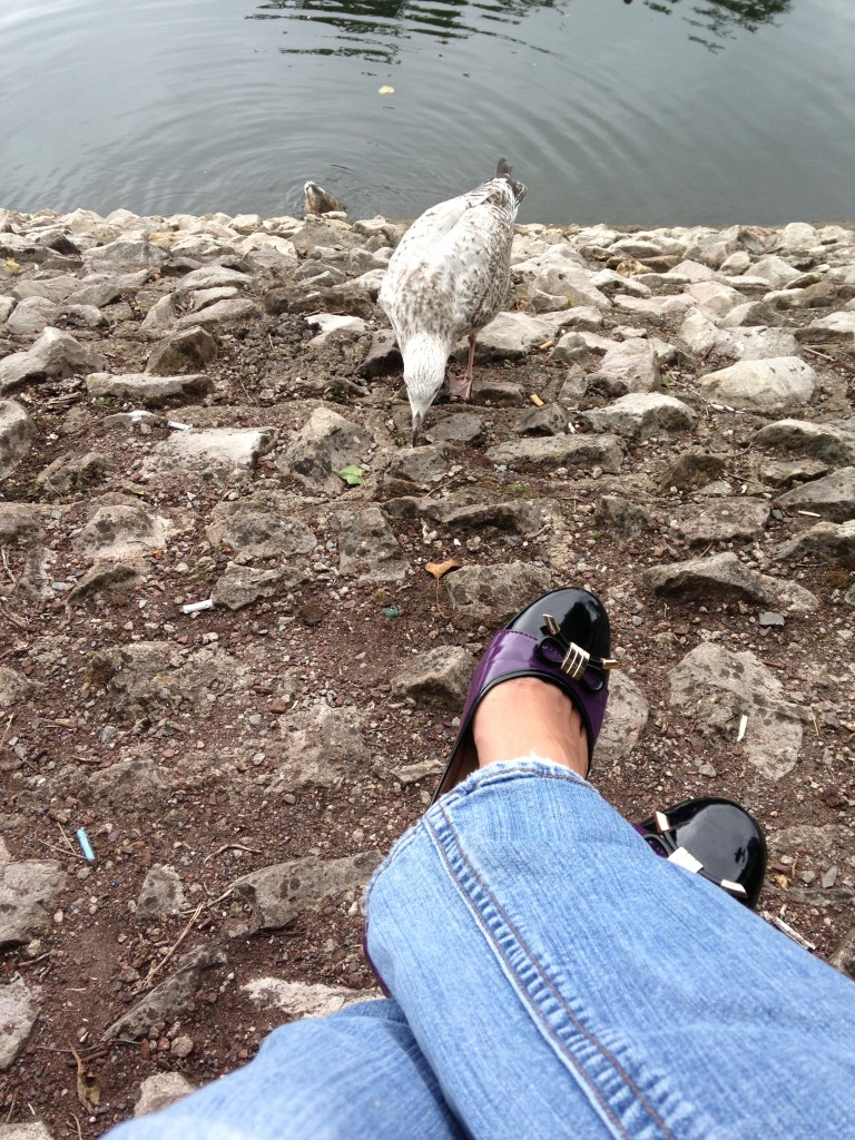 seagull pecking at ground very close to person's feet outstretched on the rocks
