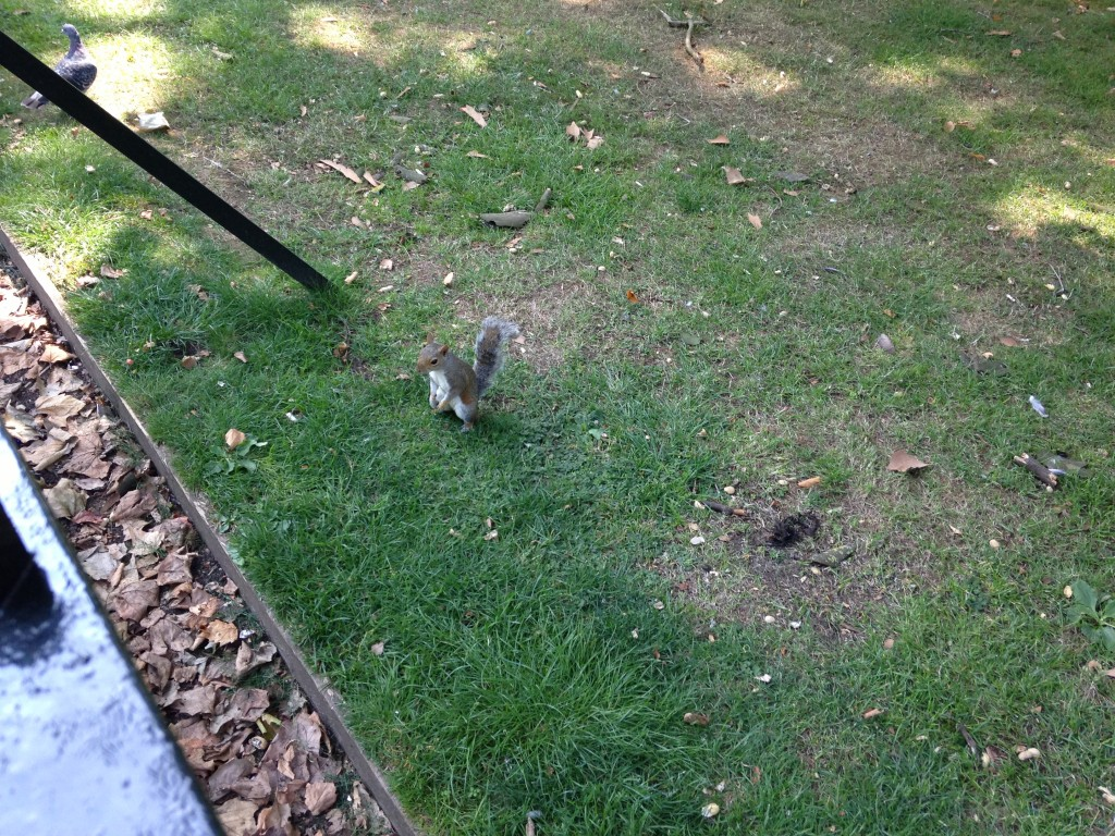 squirrel standing on hind legs looking far away