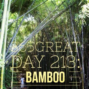365great day 213: bamboo