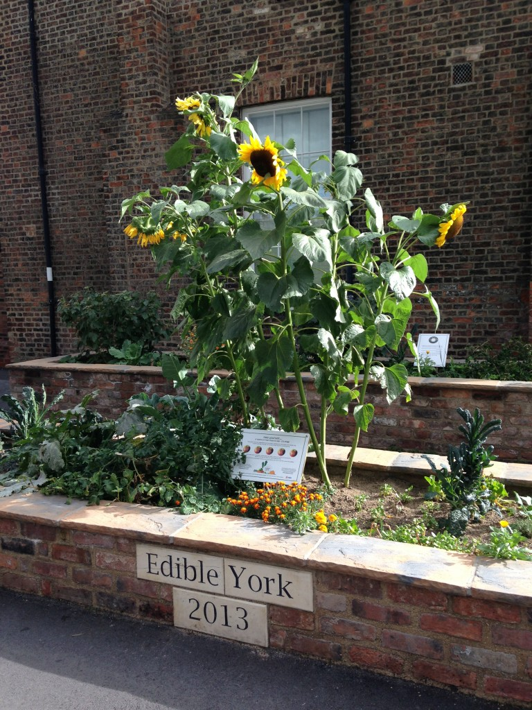 edible york mini garden area with plants growing