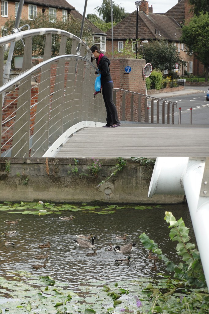 collage of person leaning over bridge feeding birds