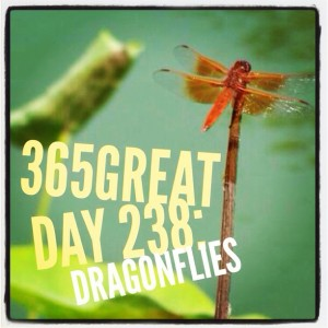 365great challenge day 238: dragonflies