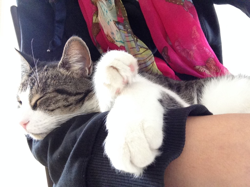 cat laying on person's arm sleeping