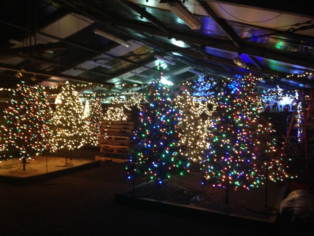 stew leonard's christmas trees all lit up and stowed away in tented area